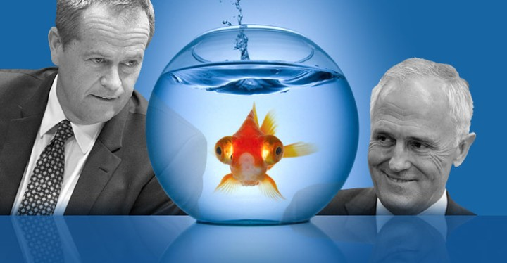 Voters treated like goldfish